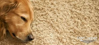 Why Is Carpet Cleaning Important to Our Kids and Pets?