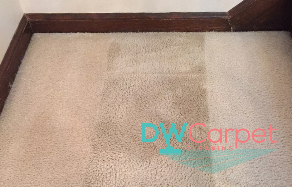 5 Things to Consider When You Engage Professional Carpet Cleaning Company in Singapore