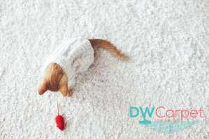 carpet-cleaning-price-in-Singapore-Dw-Carpet-Cleaning-Singaore