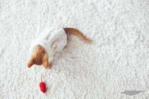 carpet-cleaning-price-in-Singapore-Dw-Carpet-Cleaning-Singaore_wm