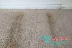 heavily-stained-brown-carpet-cleaning-dw-carpet-cleaning-singapore