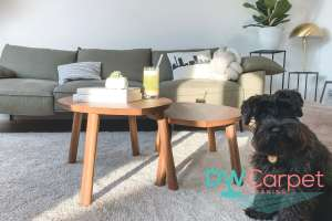 pet-away-sofa-sofa-cleaning-carpet-cleaning-singapore